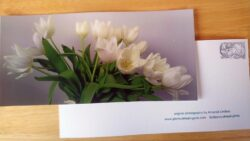 Large Postcards